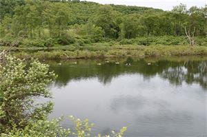 Photo of Covered Bridge Road, Livingston Manor, NY 12758 (MLS # 4983659)