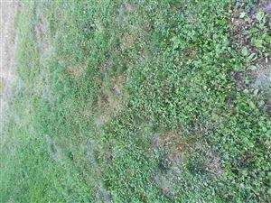 Photo of Lot 141 Pine st Street, Rochester, IN 46975 (MLS # 201932118)