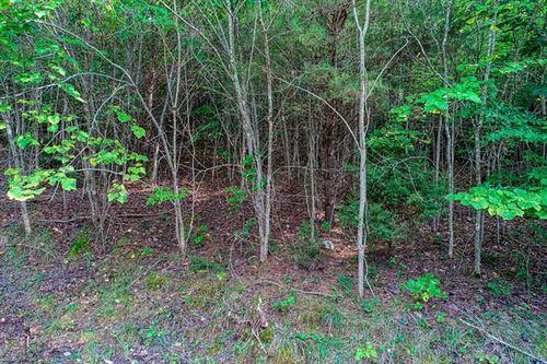 Tiny photo for Swan Seymour/cool Branch Rd Rd, Maynardville, TN 37807 (MLS # 1130140)