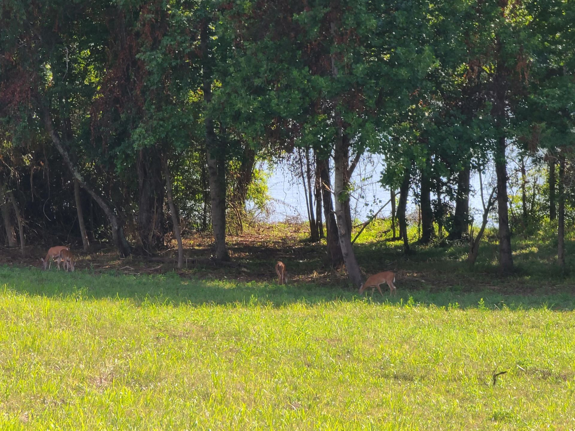 Photo for Emory River Road,Lots 8 & 9 Rd, Harriman, TN 37748 (MLS # 1140512)