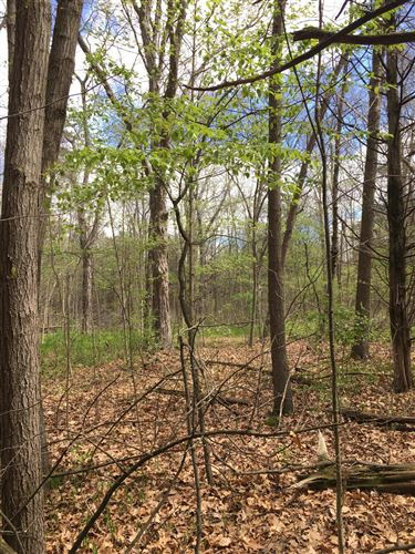 Photo of Lot 2 Chinook Lane, Lyons, MI 48851 (MLS # 255043)