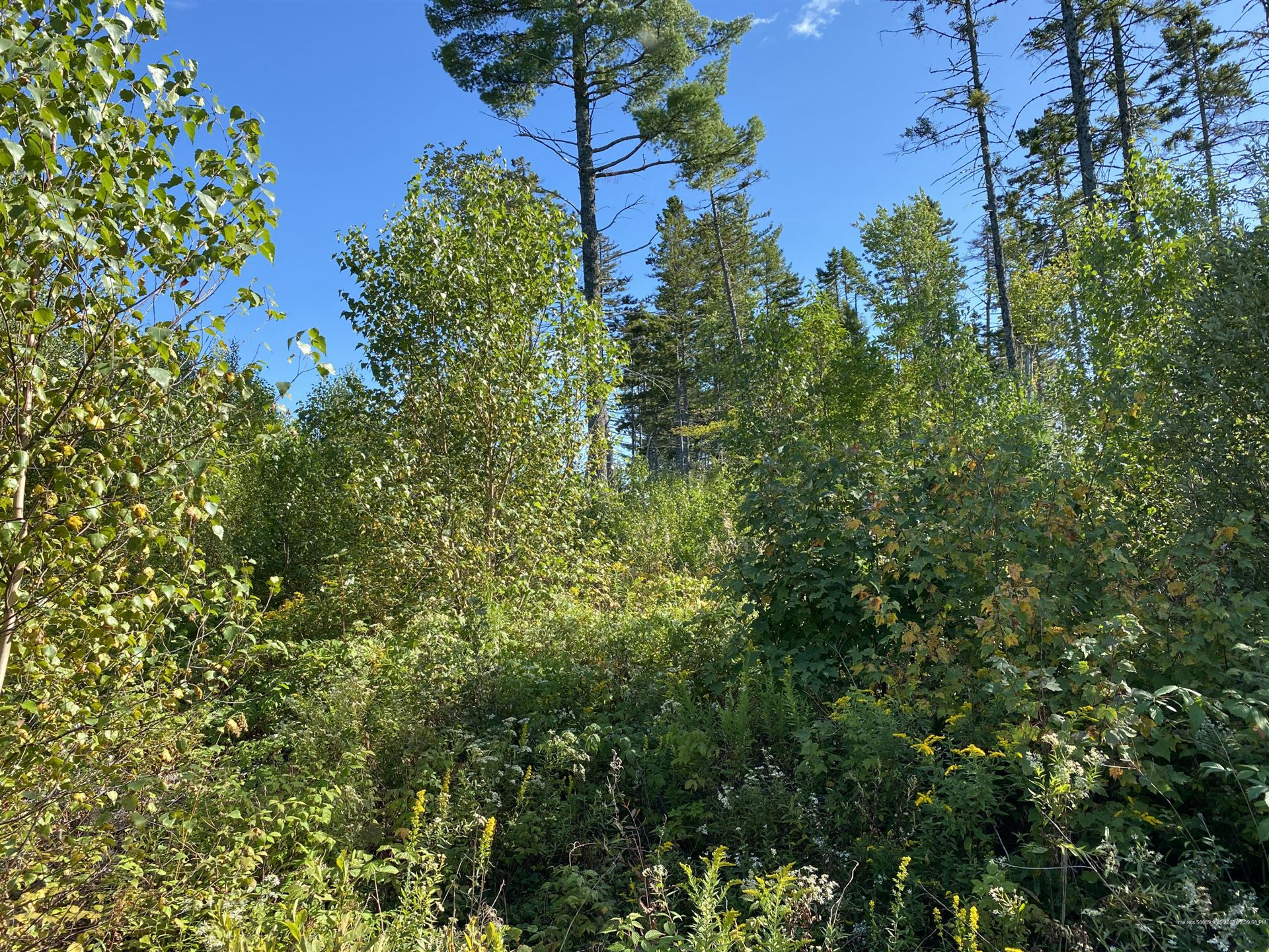 Photo of Off West Indian Road, Woodville, ME 04457 (MLS # 1469956)