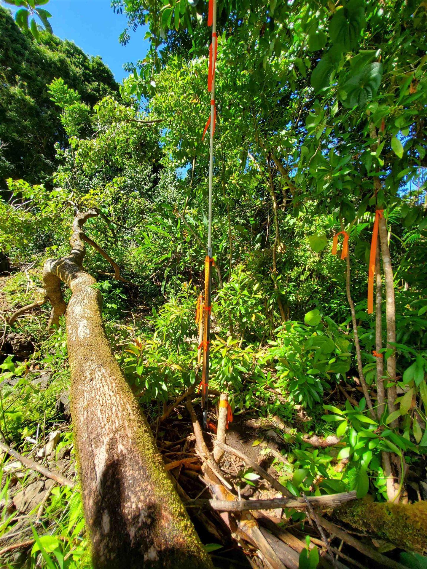 Photo of Lower Nahiku #LCAW 4853-B1, Hana, HI 96713 (MLS # 389441)