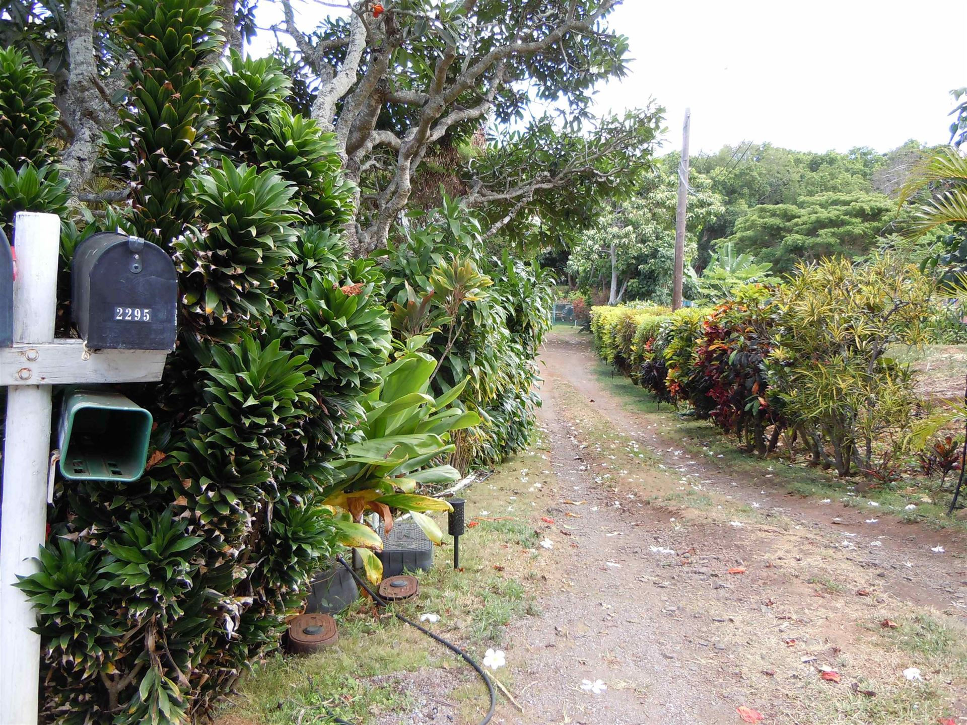 Photo of 2295 Mokuhau Rd, Wailuku, HI 96793 (MLS # 392969)