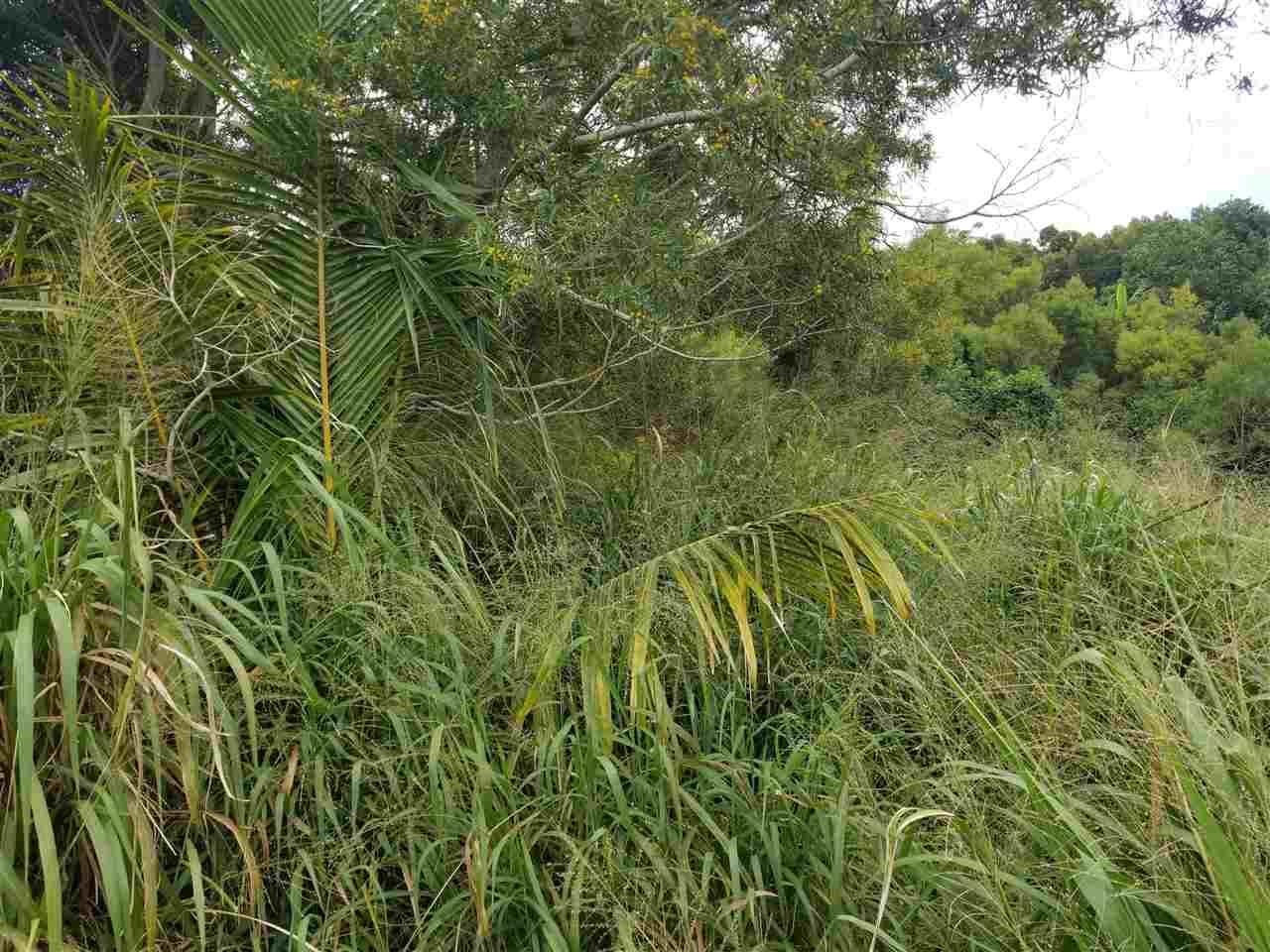 Photo of 2108 Akeu Way, Kualapuu, HI 96757 (MLS # 382982)