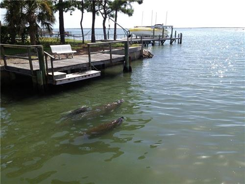 Photo of 433 PAULA DRIVE S #29, DUNEDIN, FL 34698 (MLS # U8102019)