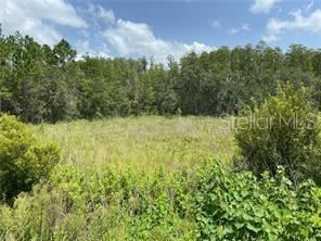 Photo of 30607 STATE ROAD 54, WESLEY CHAPEL, FL 33543 (MLS # T3285708)