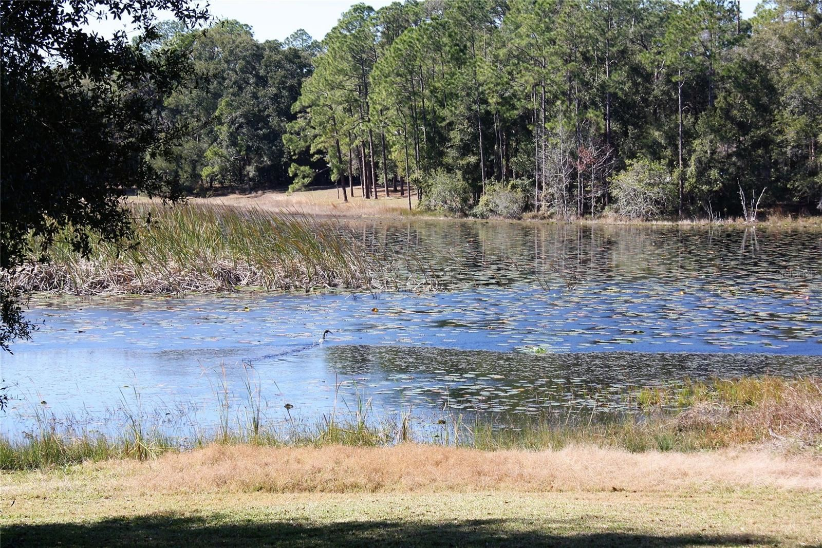 177 PAINTED POST POINT, Sanford, FL 32771 - #: O5956911