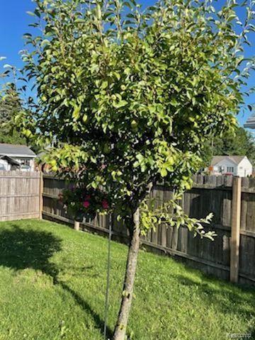 Tiny photo for 2340 HAMATA ST, Ferndale, MI 48220-1499 (MLS # 40196621)