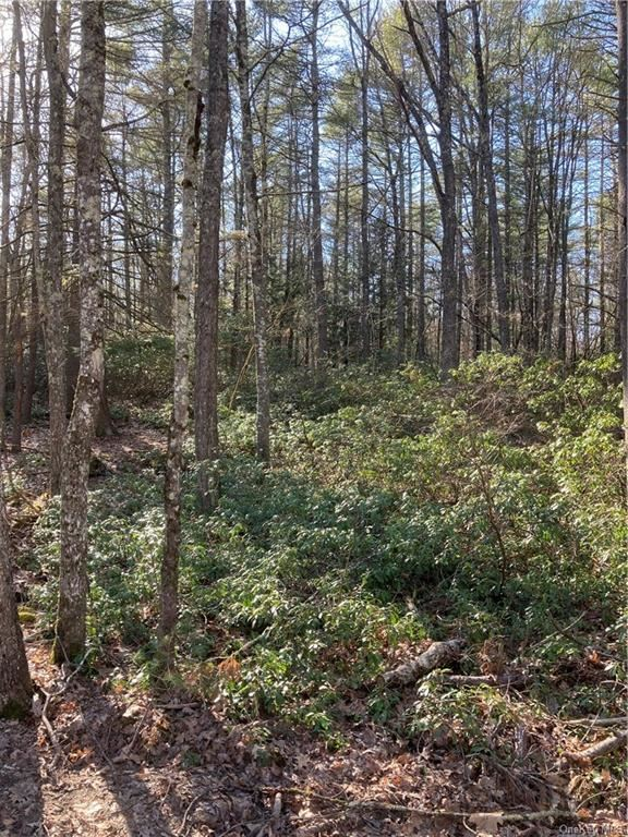 Photo for Forest Pond Road, Narrowsburg, NY 12764 (MLS # H6105067)