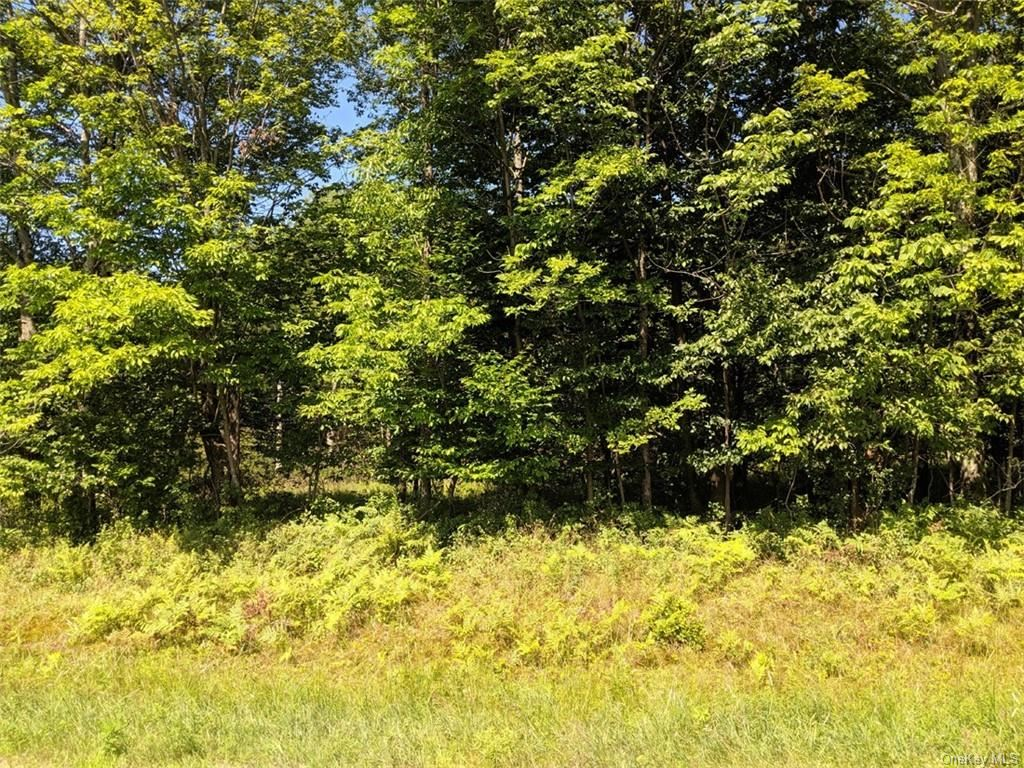 Photo for Blackberry Lake Road, Jeffersonville, NY 12748 (MLS # H6083198)