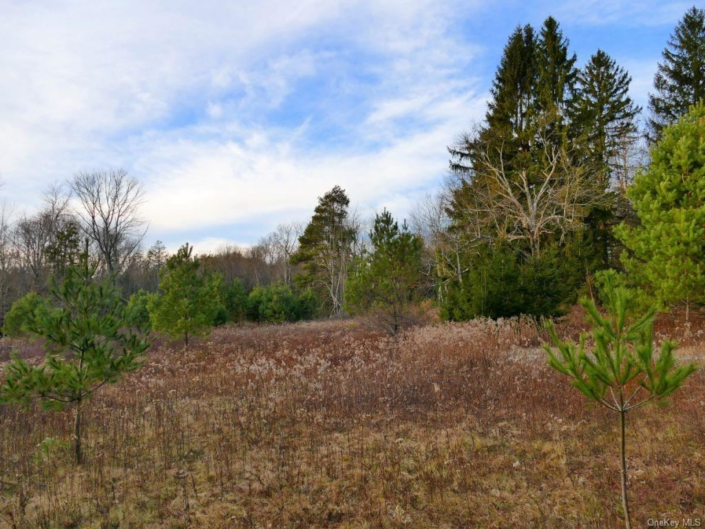 Photo for Ferndale-Loomis Road, Liberty, NY 12754 (MLS # H6089211)