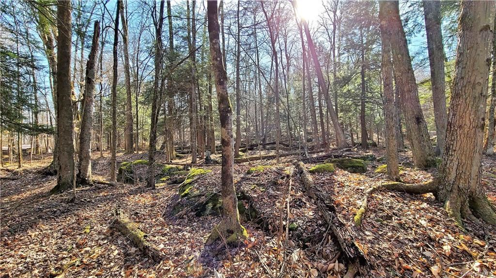 Photo for Roslyn Ridge Road, Mongaup Valley, NY 12762 (MLS # H6105283)