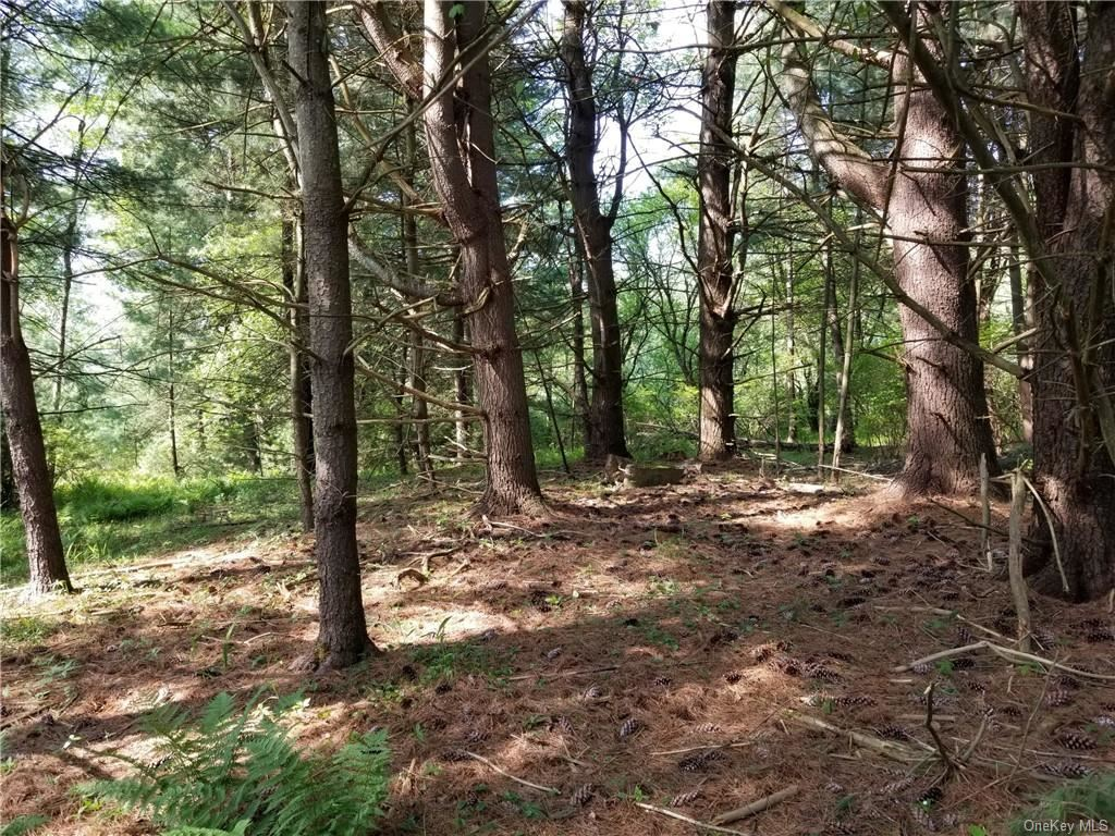 Photo for Nys Hwy 17B & Sgt. Andrew Brucher Road, White Lake, NY 12786 (MLS # H6082828)