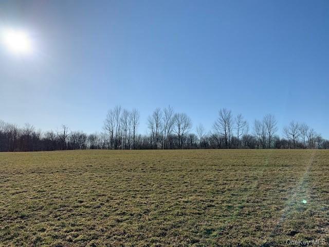 Photo for Stump Pond Road, Livingston Manor, NY 12758 (MLS # H6104955)