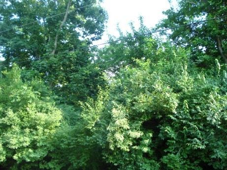 Photo of Lot 530 Rollingwood Place, Varna, IL 61375 (MLS # 10614206)