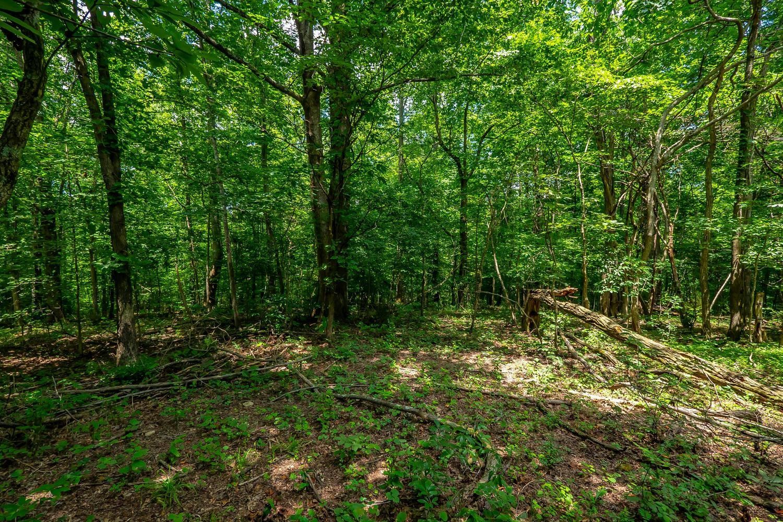 Photo of 5550 Hargrove Ridge Rd, Franklin, TN 37064 (MLS # 2276039)