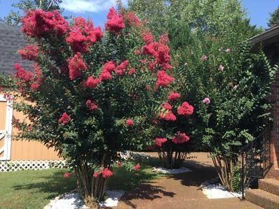 Tiny photo for 1434 Gray Fox Ln, Spring Hill, TN 37174 (MLS # 2220125)