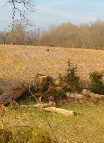 Photo of 7836 Mill Rd, Cross Plains, TN 37049 (MLS # 2137622)