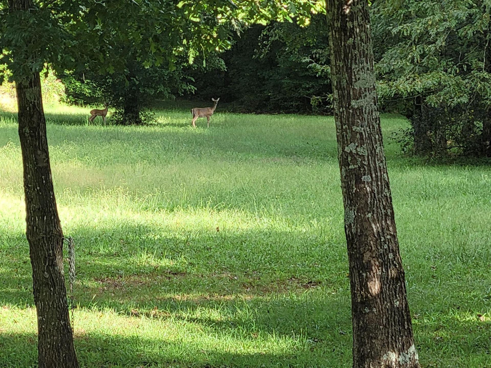 Photo of 2314 Joe Brown Rd, Spring Hill, TN 37174 (MLS # 2302696)