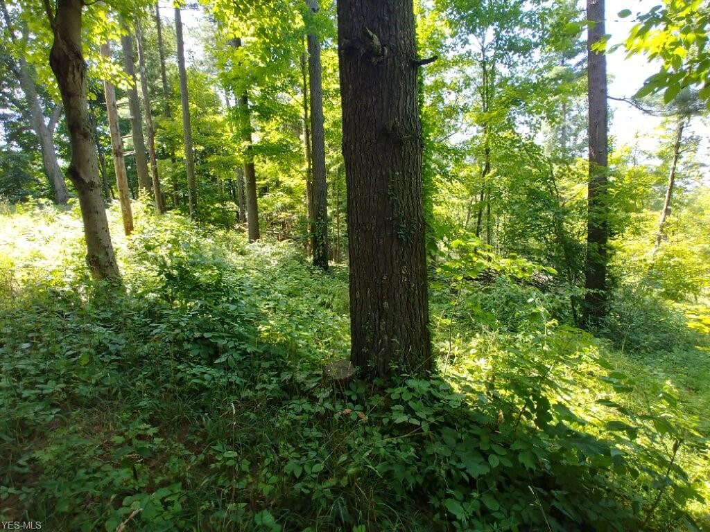 Photo for State Route 377, Chesterhill, OH 43728 (MLS # 4160230)