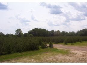 Photo of WANDERING SPRINGS Court, MOUNTAIN, WI 54149 (MLS # 50196962)