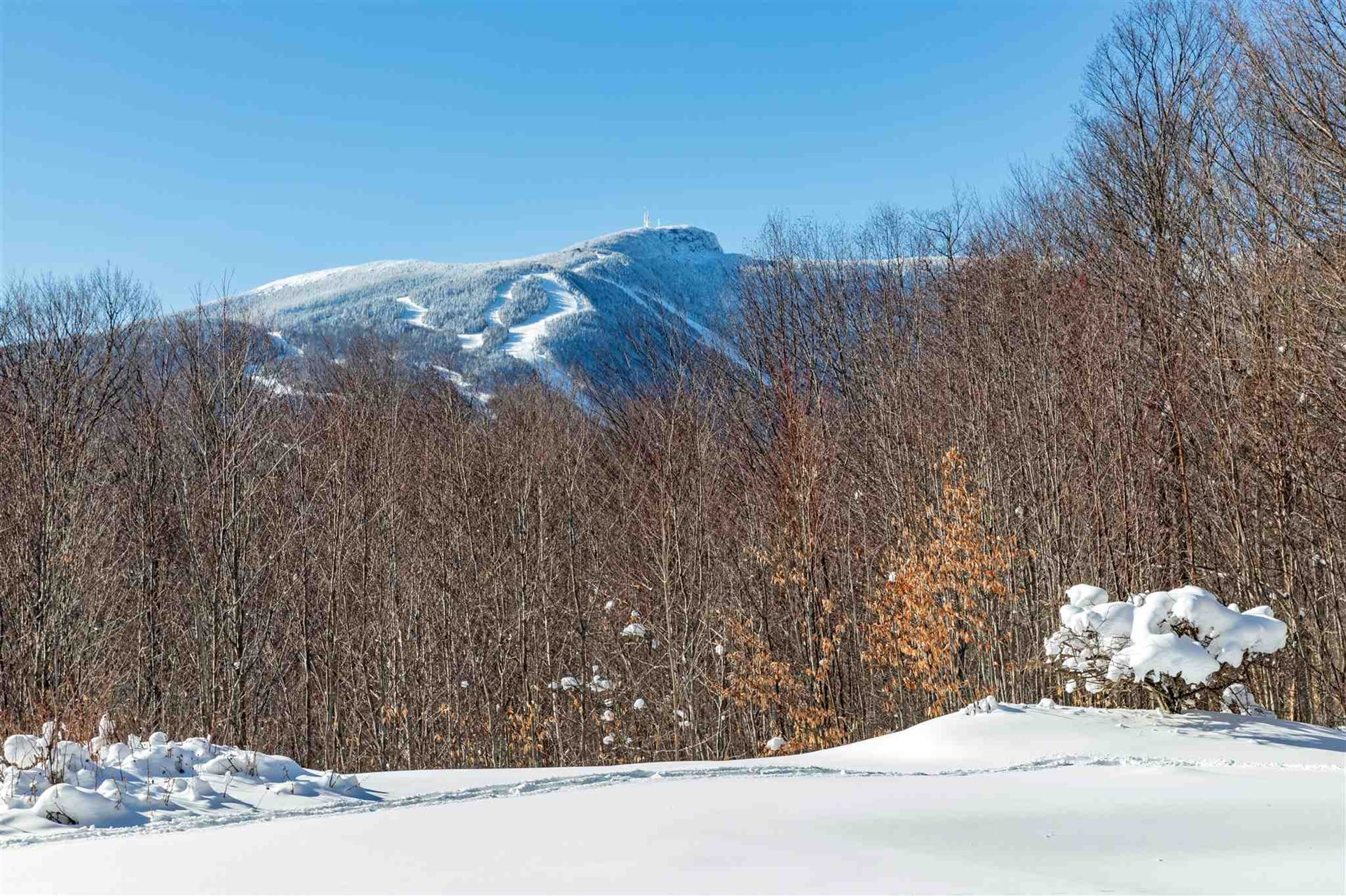 Photo of 1538 Robinson Springs Road, Stowe, VT 05672 (MLS # 4846413)
