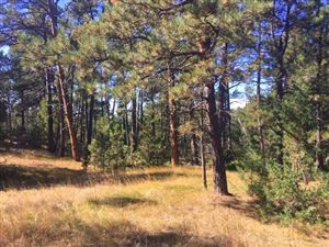 Photo of Tract 45 Calamity Jane Drive, Hot Springs, SD 57747 (MLS # 62916)