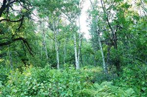 Photo of 11208 Carbonate, Deadwood, SD 57732 (MLS # 62937)