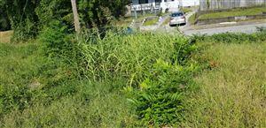 Photo of 713 N 8th Street, Wilmington, NC 28401 (MLS # 100133979)
