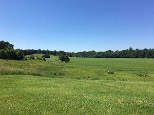 Photo of 474 County Road 444, OXFORD, MS 38655 (MLS # 144168)