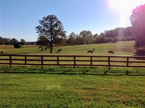 Photo of 230 CR 461, OXFORD, MS 38655 (MLS # 144371)