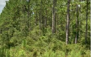 Photo of SE PEBBLE RIDGE, Lee, FL 32059 (MLS # 110144)