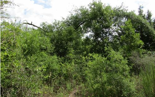 Photo of LOT22 NW 35TH AVE, Branford, FL 32008 (MLS # 103288)
