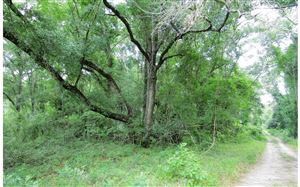 Photo of LOT51 198TH TRAIL, OBrien, FL 32060 (MLS # 104647)