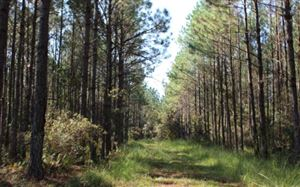 Photo of MORRIS STEEN RD, Madison, FL 32331 (MLS # 105664)