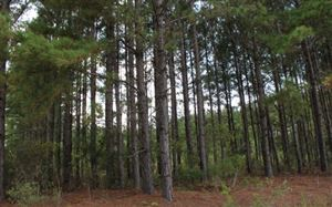 Photo of S CLOUGHS BAY RD, Other, GA 31501 (MLS # 105727)