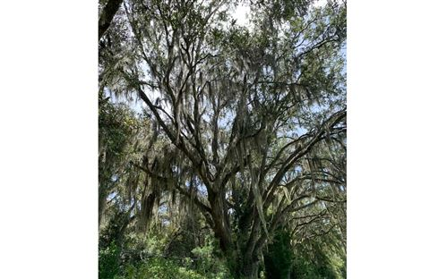 Photo of SW PINEMOUNT ROAD, Lake City, FL 32055 (MLS # 108859)