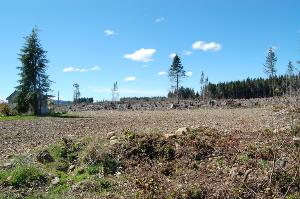 Photo of 9999 Lot 39 King Richards Wy, Forks, WA 98331 (MLS # 348098)