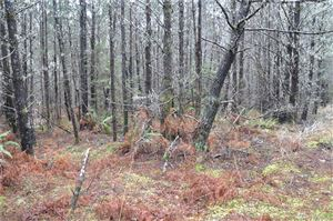 Photo of 0 105th Lane Lot: 086, Long Beach, WA 98631 (MLS # 1082187)