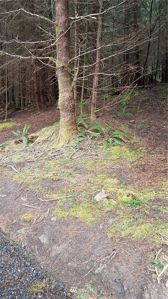 Photo of 9999 South Valley Rd Lot 9, Naselle, WA 98638 (MLS # 1431870)