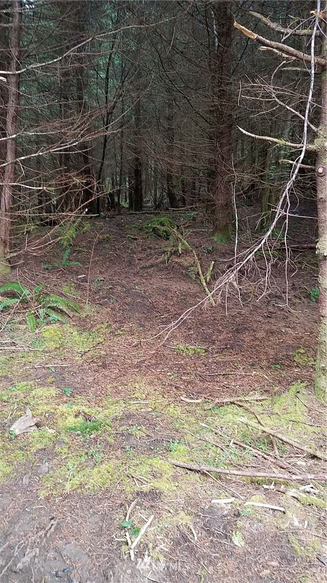 Photo of 9999 South Valley Rd lot 10, Naselle, WA 98638 (MLS # 1431884)