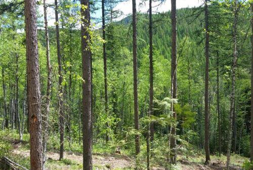 Photo of 3120 North Fork Road, Columbia Falls, MT 59912 (MLS # 22102265)