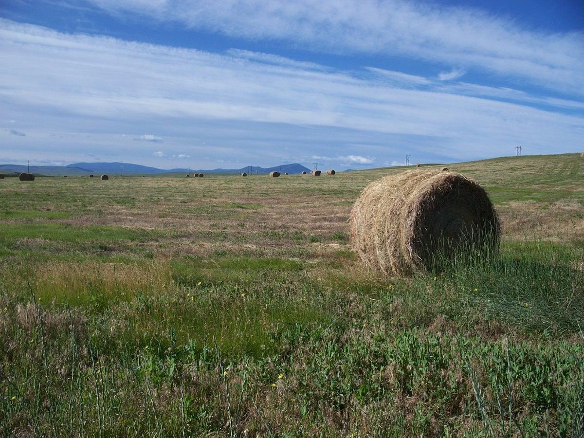 Photo of 2238 Tiger Butte Road, Belt, MT 59412 (MLS # 22010442)