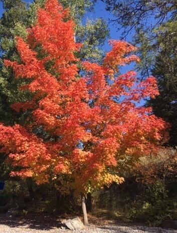 Photo of 210 Spyglass Hill Way, Columbia Falls, MT 59912 (MLS # 22108472)