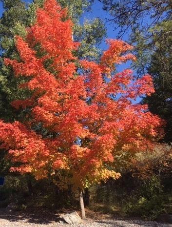 Photo of 124 Spyglass Hill Loop, Columbia Falls, MT 59912 (MLS # 22101607)
