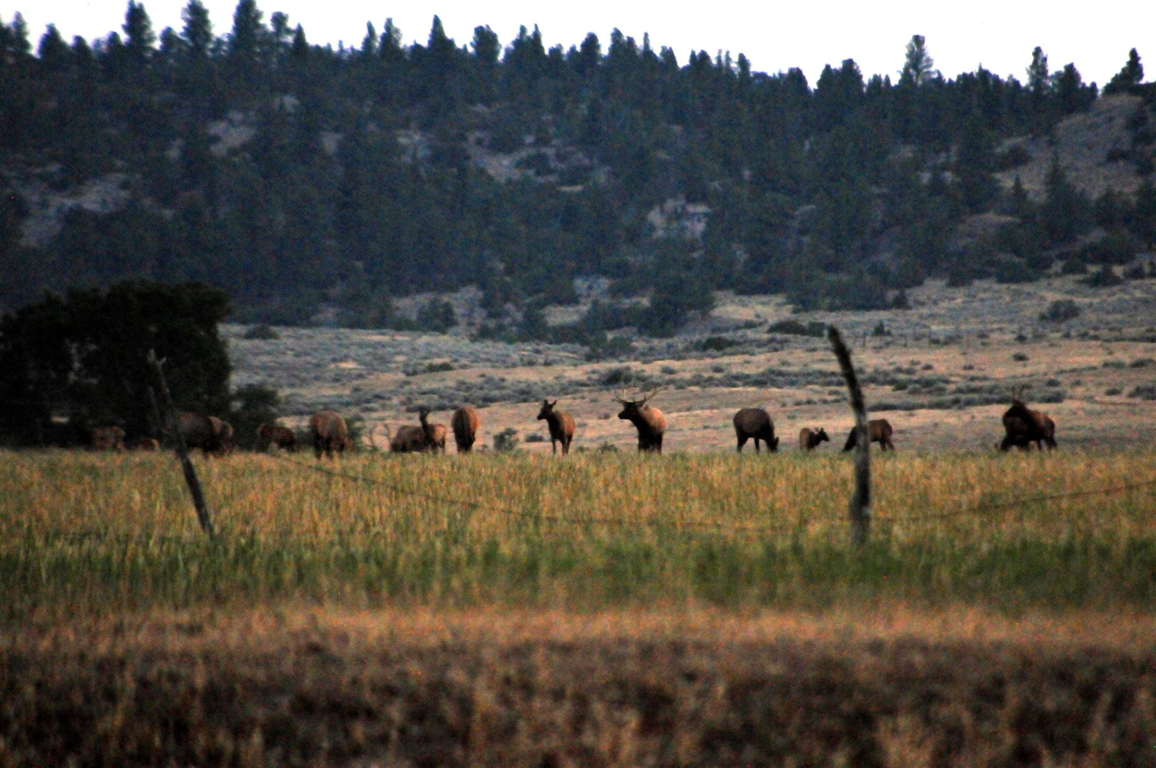 Photo of 876 Lower Sweet Grass Road, Big Timber, MT 59011 (MLS # 22108662)