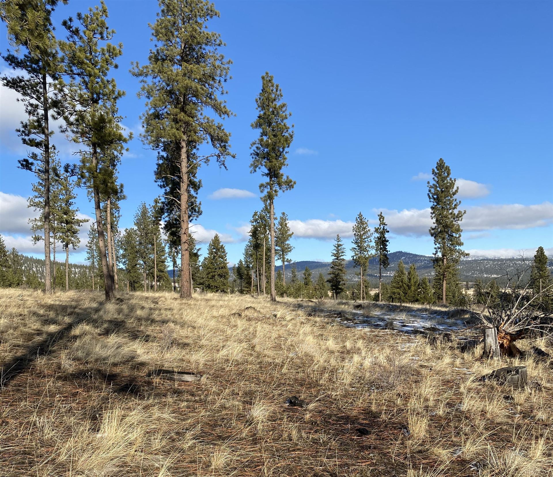 Photo for Nhn Moore Ranch Road, Marion, MT 59925 (MLS # 22107773)