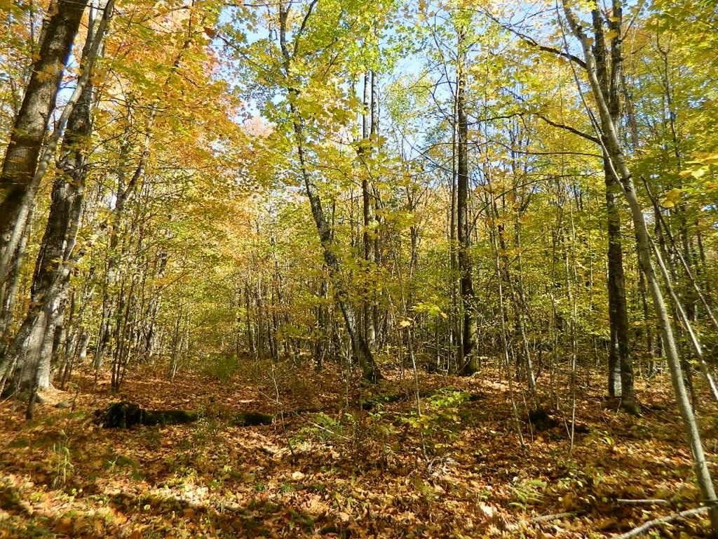 Photo of On Tower Road, Winter, WI 54896 (MLS # 1548323)