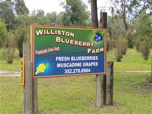 Photo of 6451 NE 137 Court, Williston, FL 32696 (MLS # 541131)